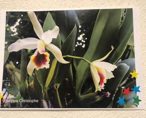 Actividades del club amigos de las orquideas